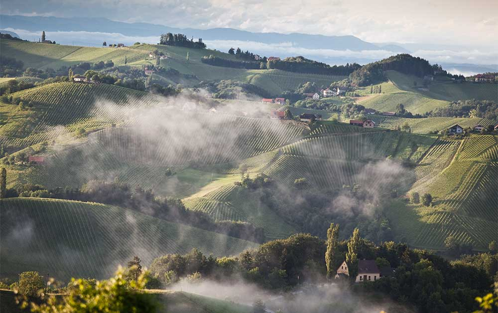 Österreich Wein - Weinregionen