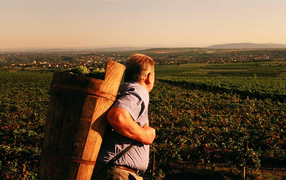 Österreich Wein - in der Schaeiz