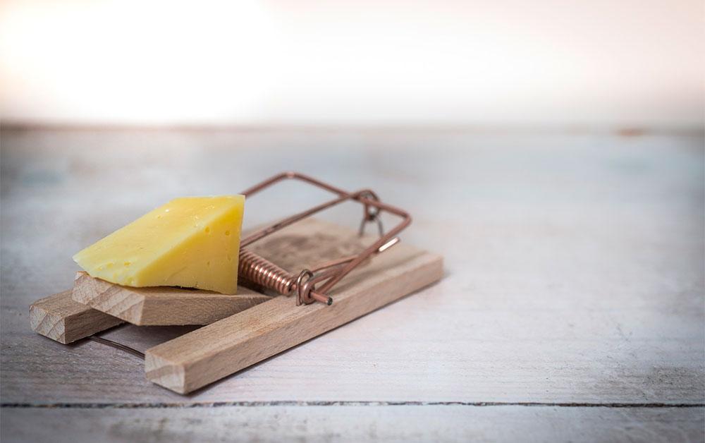 Österreichischer Wein und Käse